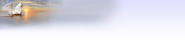 schwan-himmel.jpg